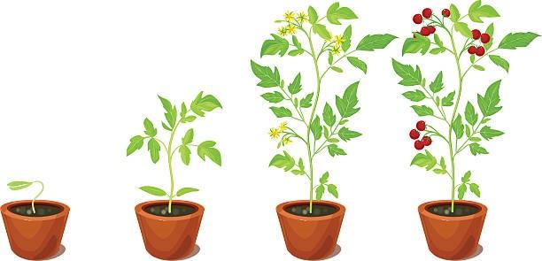 Inbjudan till Växtbytardag 12:e maj