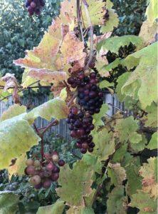 Vinprovning @ Hurva församlingshem | Skåne län | Sverige