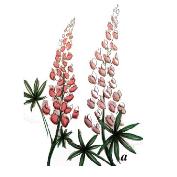 Växtbytardag, minimarknad och trivselaktiviteter